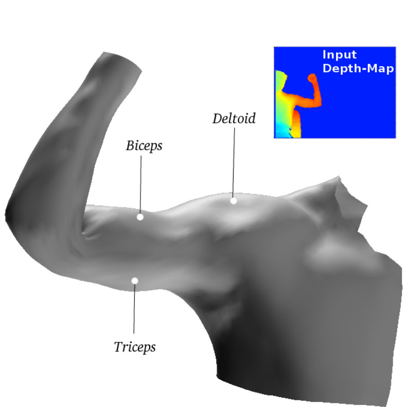 Capture of Arm-Muscle Deformations using a Depth-Camera