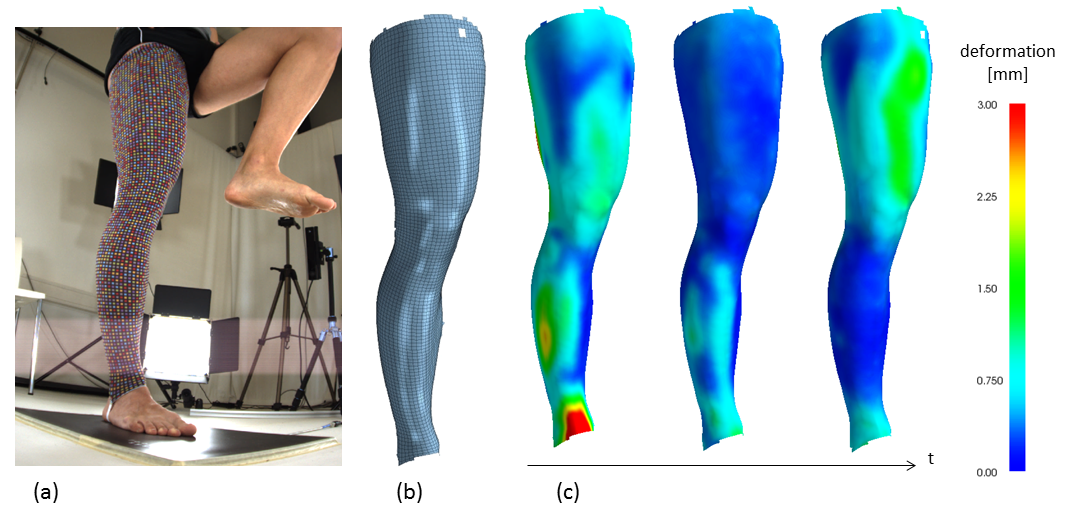 Towards estimation of muscle activity patterns for balance assessment from surface deformations in motion